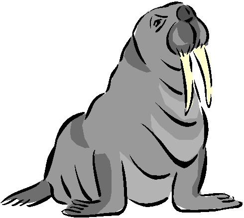 Walrus clipart 5