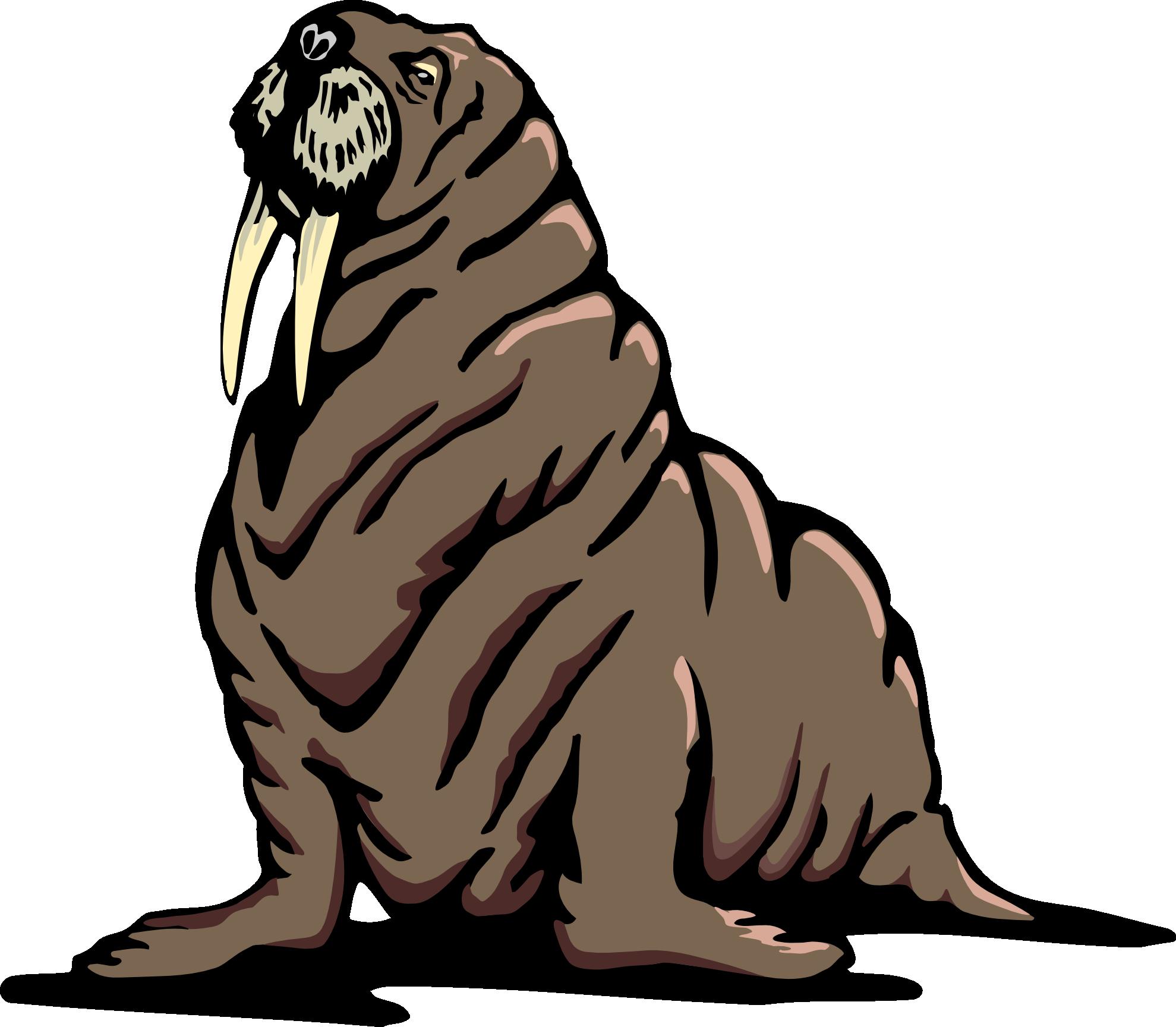 Real Walrus Clipart - Walrus Clipart