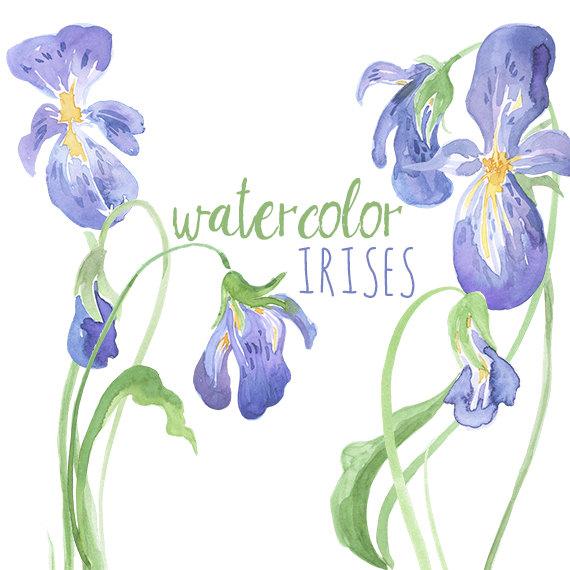 Watercolor Irises Clip Art, Iris artwork, Watercolor Iris, Digital Easter graphics, Easter