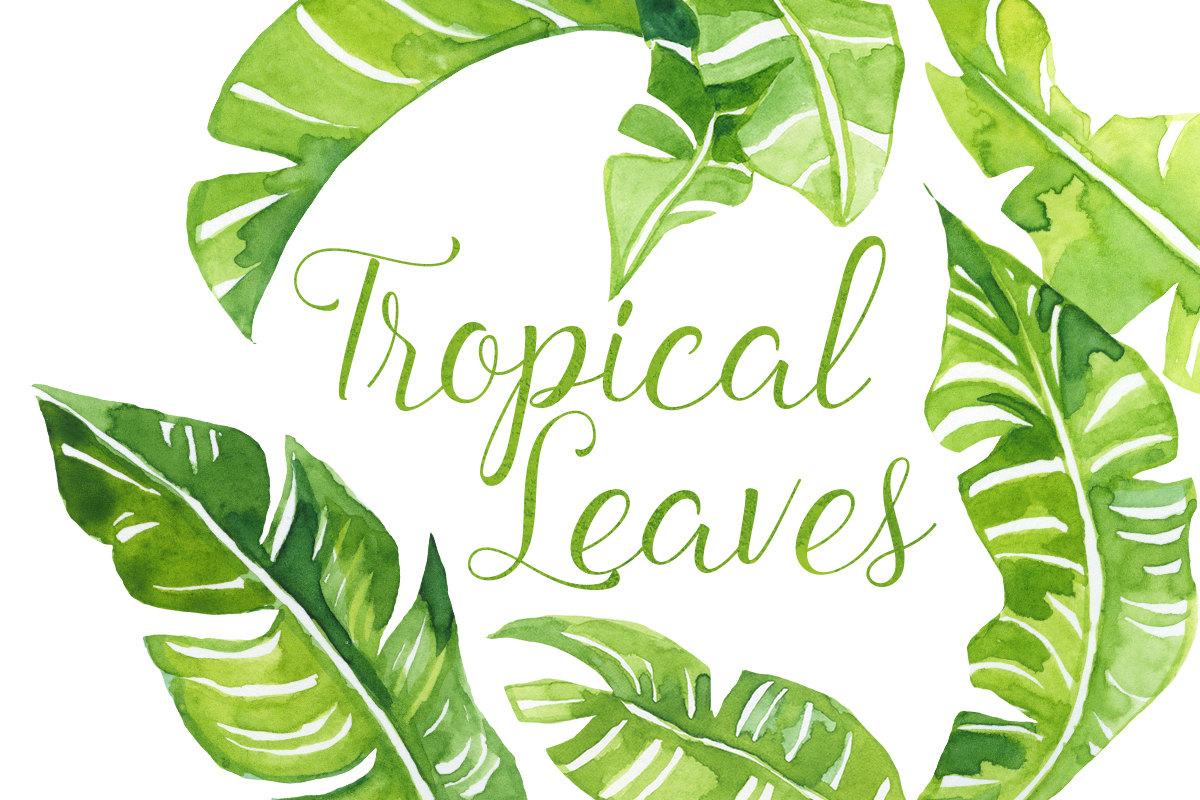 Watercolor Tropical palm Leaves Clip Art, Tropics clipart, polynesian clipart, Hawaiian Illustration, Beach Clip Art, Banana Leaves Clipart