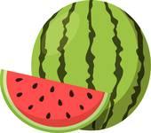 Watermelon icon vecotr illustration; Watermelon.