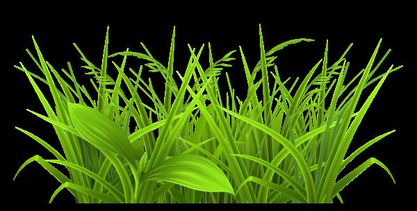 Weeds. Rag Weed Clip Art