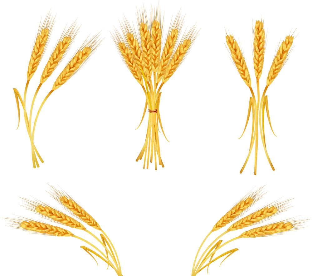 Wheat Clip Art 04 Freeimageshub