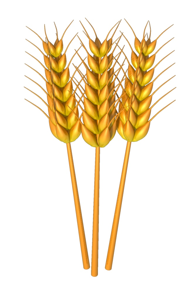 Wheat Clip Art Free All Download