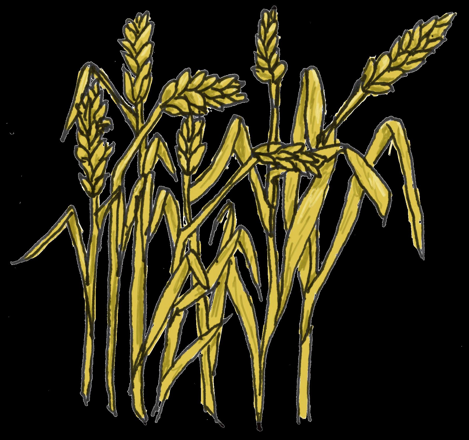 Wheat Images Clip Art Clipart Best