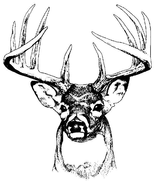 Whitetail Buck Clipart #1