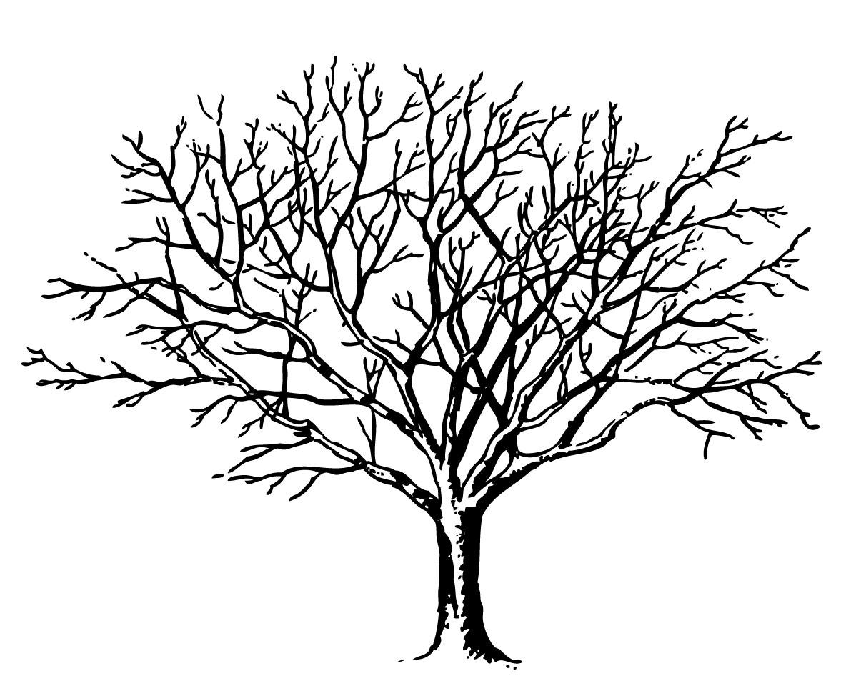 Winter Tree Clipart Winter Tree Clipart Winter Tree Clipart Winter