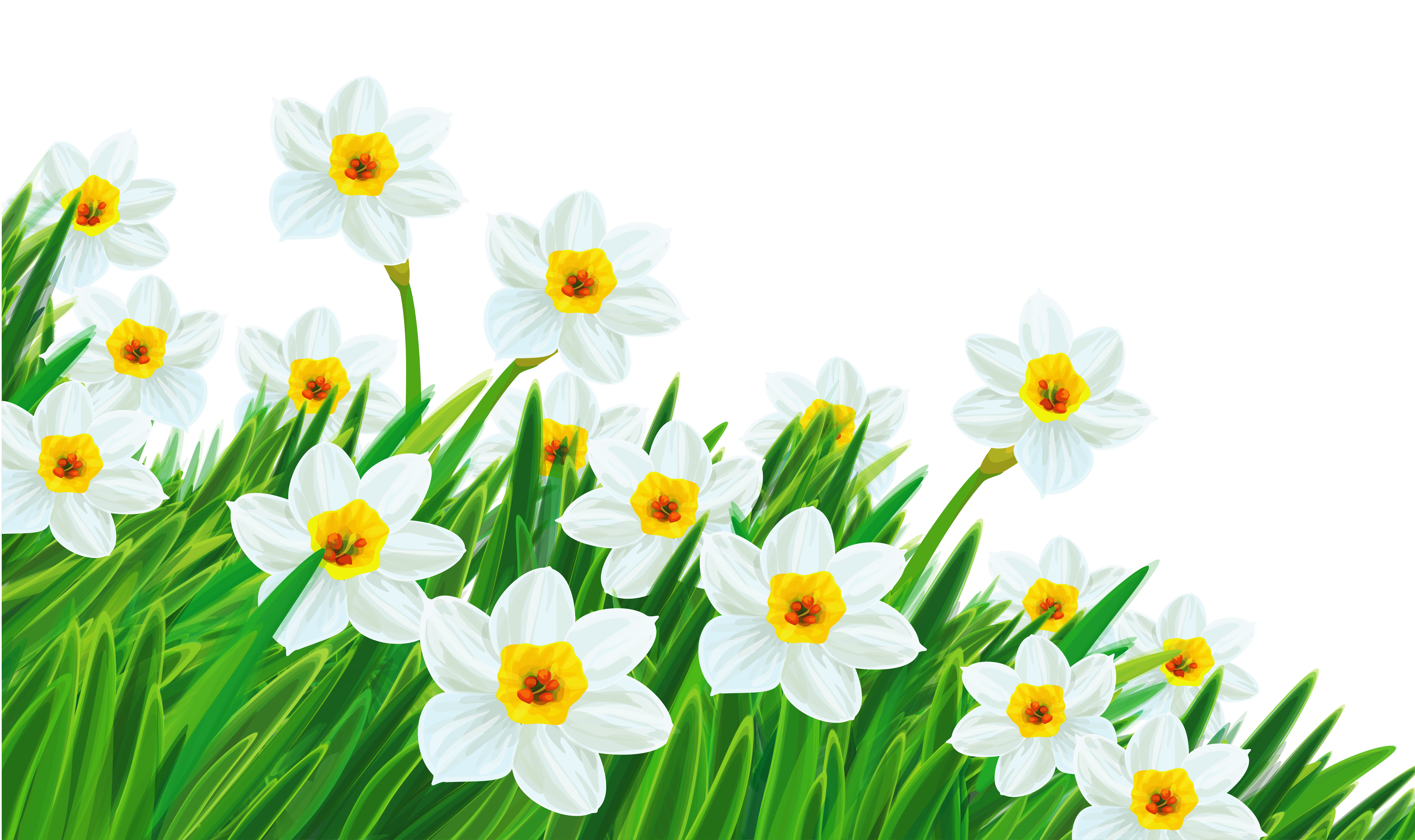 with Daffodils Clipart