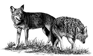 Wolves Clipart-hdclipartall.c - Wolves Clipart