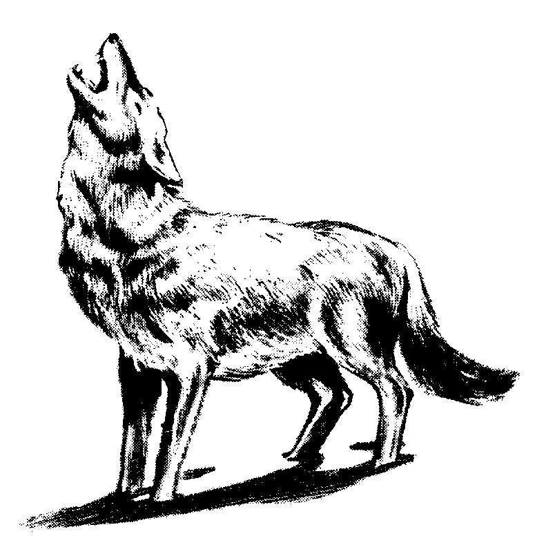 Wolf Clipart Clipart