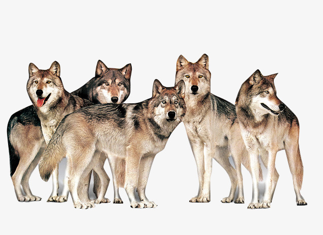 wolves team, Team Clipart, Power, Unity PNG Image and Clipart