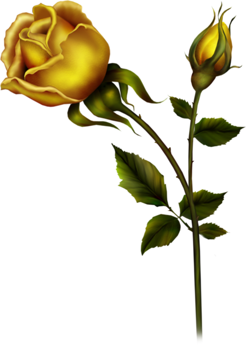 Yellow Rose with Bud PNG Clipart