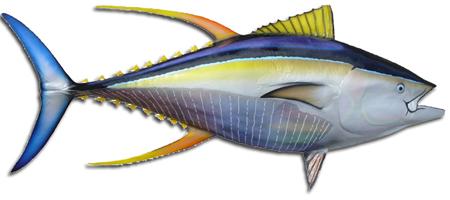Yellowfin Tuna Clipart