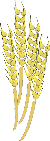 You can use this wheat clip art for personal or commercial use. Use this clip art on your farm projects, posters, print ads, websites, e-books, magazines, ...