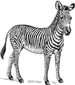 Zebra Black And White Clipart. Zebra Clip Art