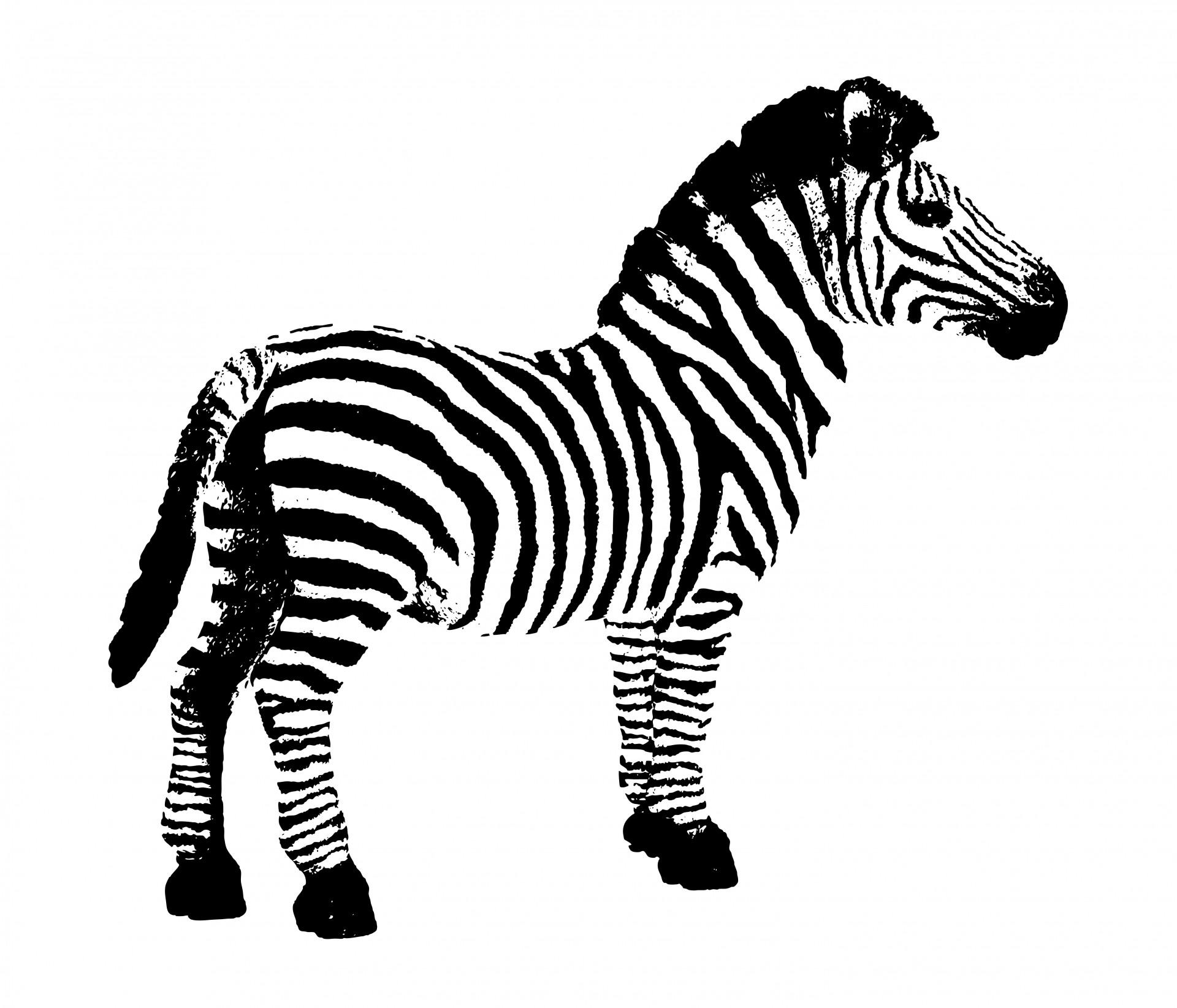 ... Zebra clip art free - Cliparting clipartall.com ...